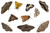 Mixed Moths