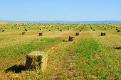 foto of alfalfa  - Rows of freshly baled hay or alfalfa - JPG