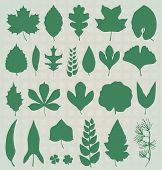 picture of eucalyptus leaves  - Collection of leaf silhouettes in natural tone colors - JPG