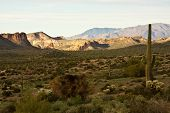 picture of superstition mountains  - Cacti flank Arizona