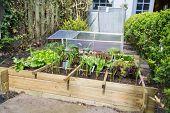 Horta com legumes sortimento e contaminar frio