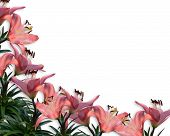 stock photo of easter flowers  - Image and illustration composition of pink lilies for Easter wedding birthday party invitation border or frame on white background with copy space - JPG