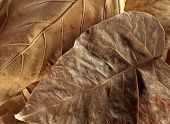 Withered Leafs Background