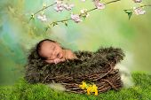Sleeping african baby in a springtime or easter nest