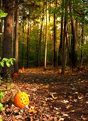 image of jack-o-laterns-jack-o-latern  - trail in a forest lined with pumpkins - JPG