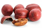 pic of pecan  - Close - JPG