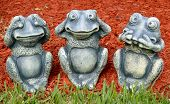 See No Evil Frogs