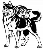 image of husky sled dog breeds  - siberian husky sled dogs black and white illustration - JPG