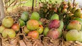 Mangos At A Local Fruit Stand