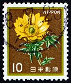 Postage Stamp Japan 1980 Amur Adonis, Flower