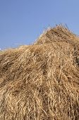 Straw roof in local village in South Luangwa National Park, Zambia, Africa