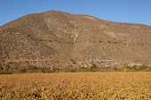 Vineyards of Chile