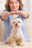 image of qigong  - Woman doing Reiki therapy for a dog - JPG