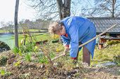 stock photo of hoe  - Elderly woman wearing blue coat gardening with a hoe - JPG