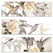 stock photo of hummingbirds  - Vector set of floral hand drawn brochures with hummingbirds for business cards design - JPG