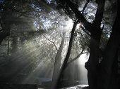 Heavenly Rays