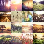 Summer meadows collage