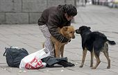 Homeless Woman Feeding Ownerless Dogs