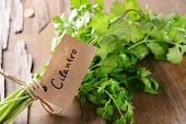 Cilantro on table close-up