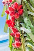closeup of beautiful wedding arch decorated with palm trees and flowers on tropical sand beach, beach wedding setup