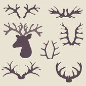 Deer horns set. Vector illustration. Animals horns set.