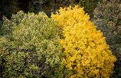 Beautiful Yellow Autumn Tree