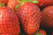 Pile of ripe garden strawberries close-up. Shallow depth of field