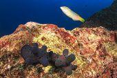 Sponge snails mating