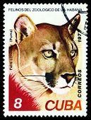 Vintage  Postage Stamp. Wild Big Cats. Puma.