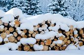 Cut Logs In A Winter Wood Under Snowdrifts