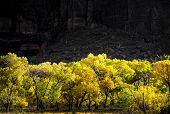 Autumn Leaves In Zion National Park, Utah
