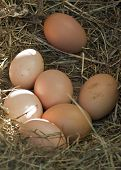 Eggs Which Are Left Unhatched In The Hay