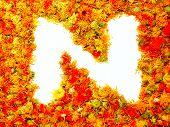 Flowers letter N.