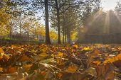 Sun Shining Through Maple Alley