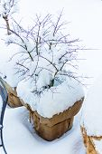 snowy planter in garden, photo icon for winter, winter dormancy and frost protection