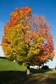 Colorful Tree In The Fall