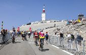 Amateur Cyclists On Mont Ventoux