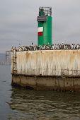 Sea Birds on the Quayside