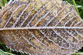 Closeup of an autumn tree leaf.