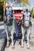 Fancy White Horses With Traditional Carriage Closeup On The Street