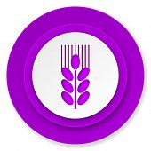 grain icon, violet button, agriculture sign