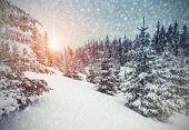 Majestic winter landscape glowing by sunlight. Dramatic wintry scene. Carpathian, Ukraine, Europe. Beauty world. Retro vintage filter. Instagram toning effect. Happy New Year!