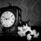 Cat lean on antique clock in a vintage surround - Black and White toned
