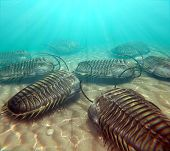 Trilobites Scavenging On The Seabottom
