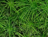 Starburst Plants