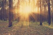 beautiful sunset in the woods, retro filtered, instagram style