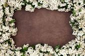 Hawthorn blossom flower frame forming an abstract border over lokta paper background.