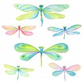 stock photo of summer insects  - Collection of watercolor dragonflies - JPG