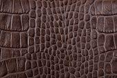 picture of alligator  - Brown alligator leather testure close up background - JPG