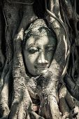 picture of buddha  - Buddha Head in Tree Roots Ruins of Wat Mahathat - JPG
